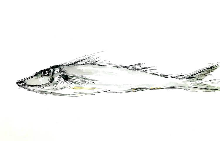 Whiting, 2021, ink on paper, 20cm high x 30cm wide
