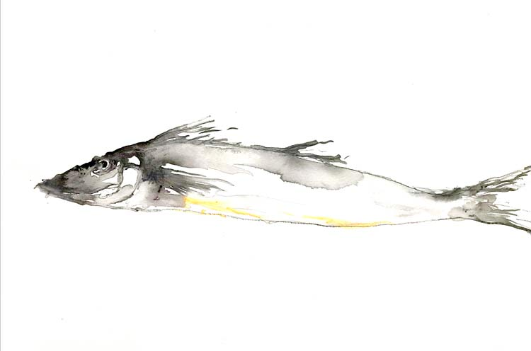 Whiting, 2021, ink and pencil on paper, 20 cm high x 30 cm wide